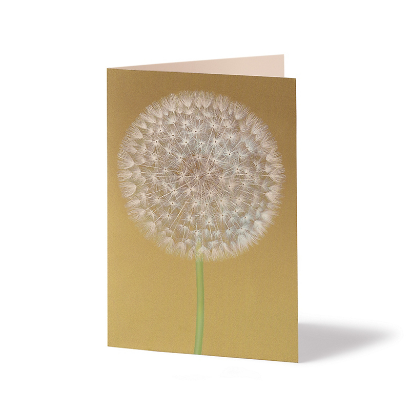 Caspari Personalized Dandelion Wish Cards, Set of 50