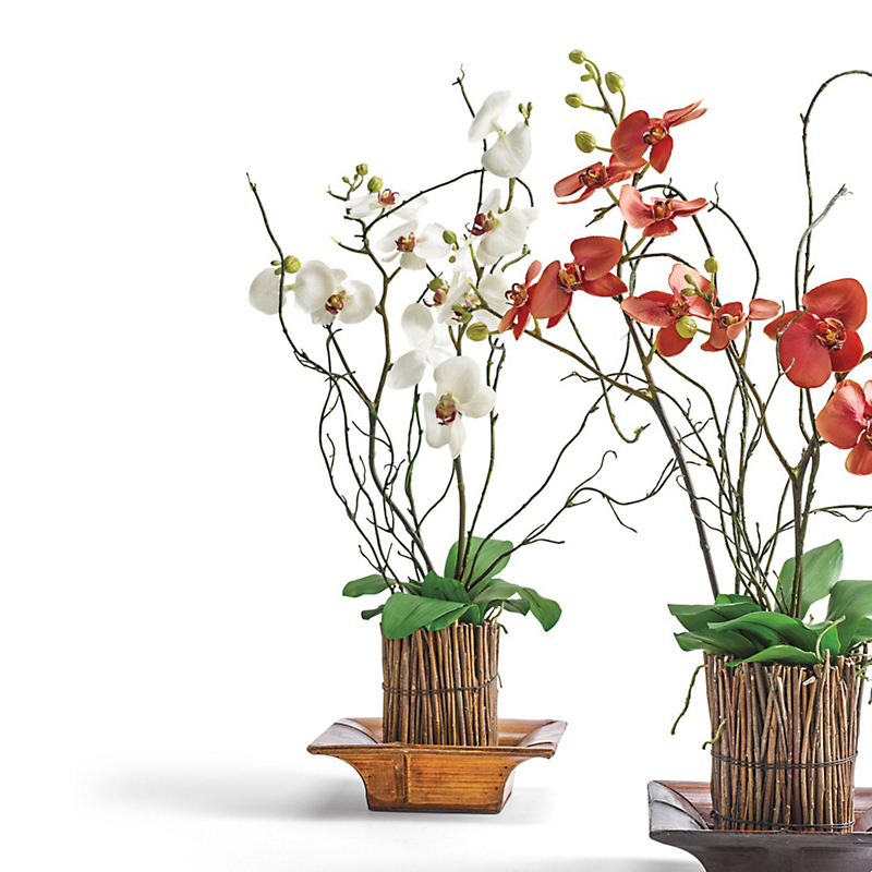 White Phalaenopsis Orchid In Wooden Basket