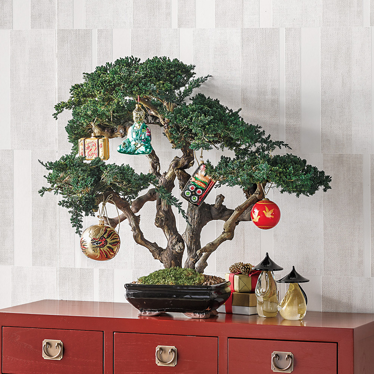 Preserved Majestic Monterey Bonsai