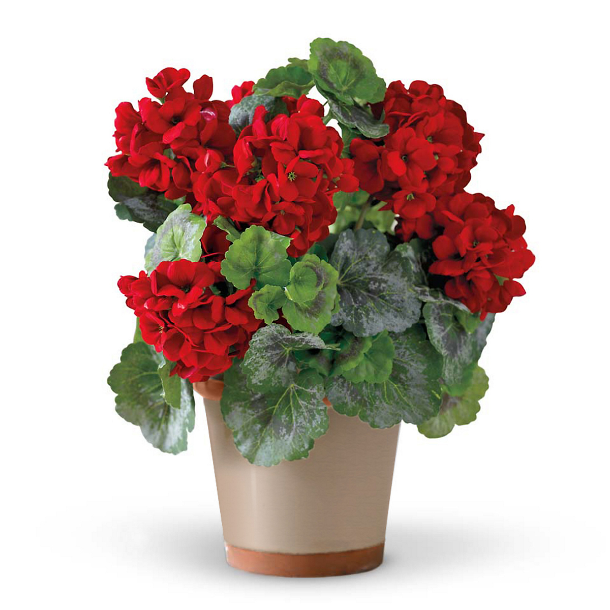 Potted Red Geranium