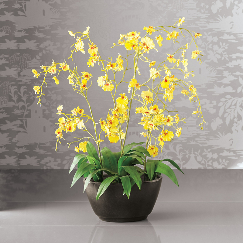 Oncidium Orchid, Yellow