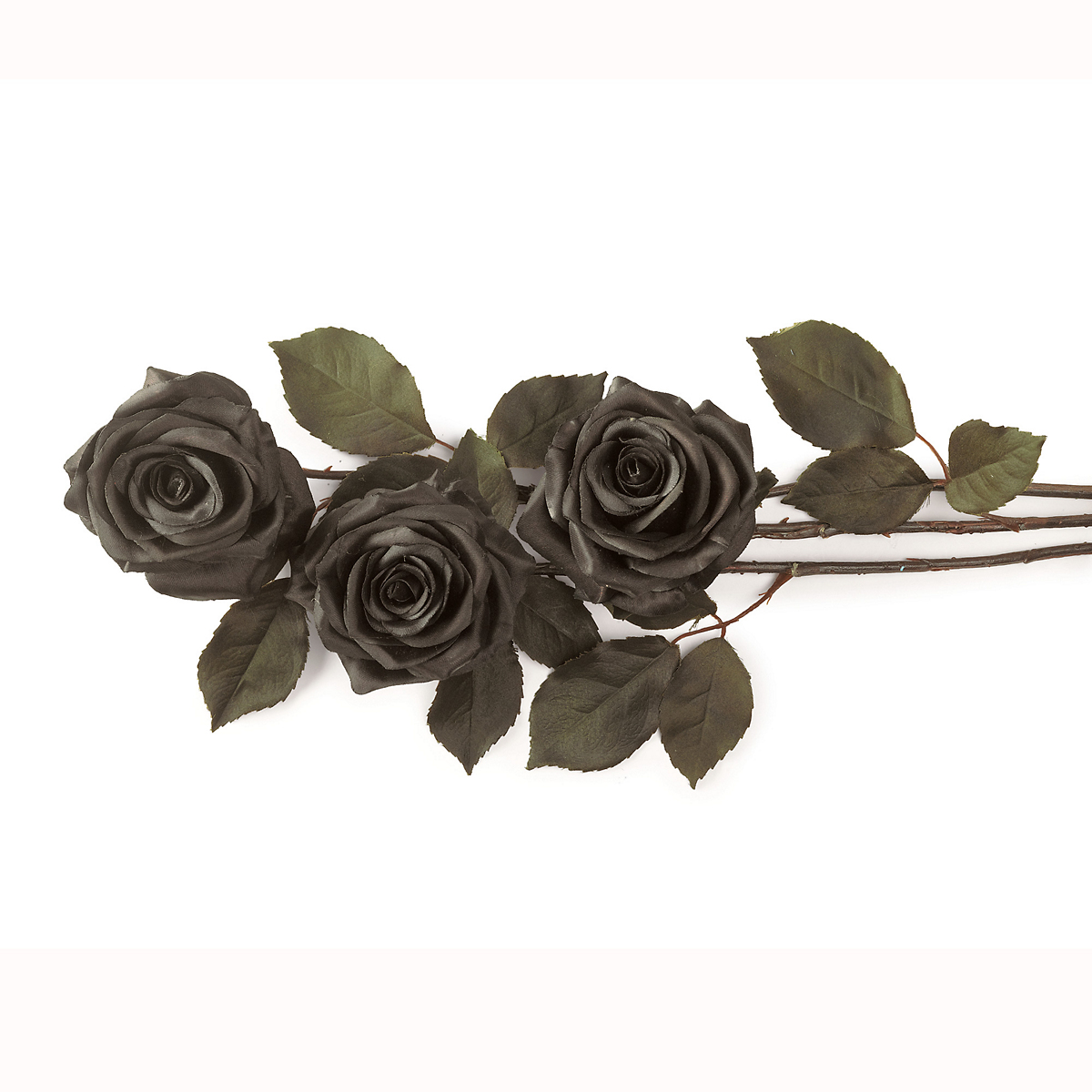 Black Rose Stems