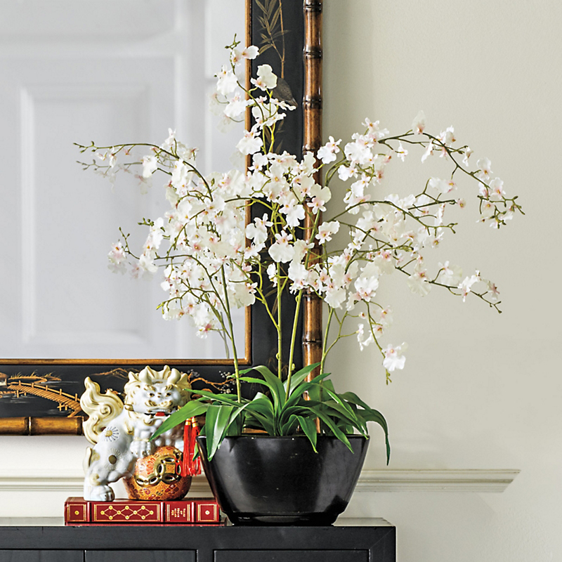 Oncidium Orchid, Cream