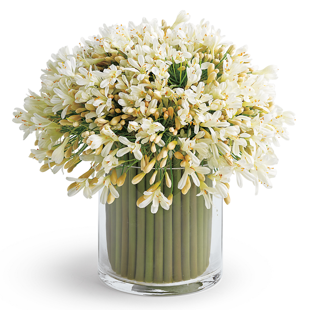 White Agapanthus Arrangement