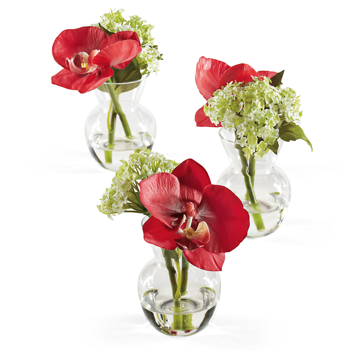 Vanda Orchid Trio Red