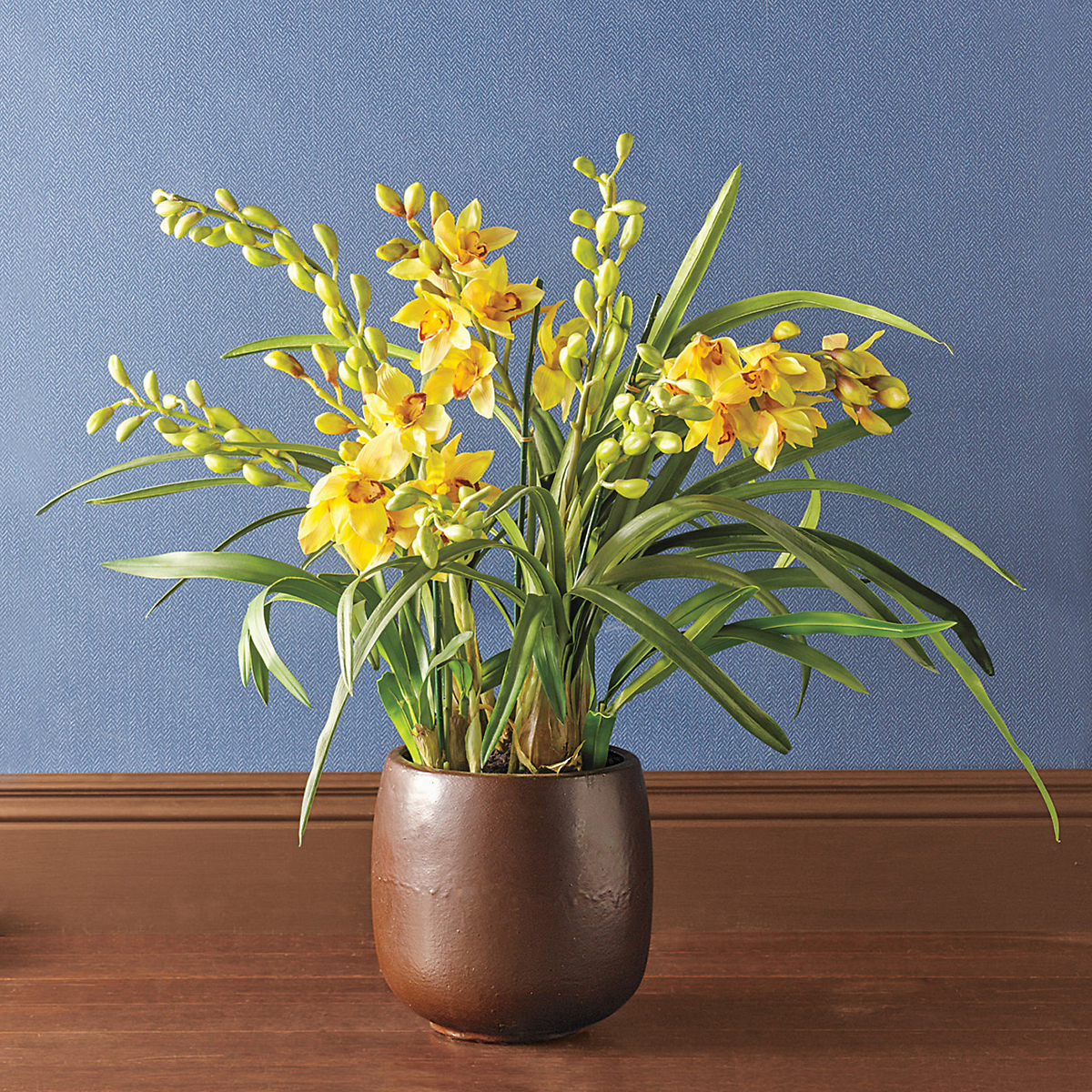 Grand Yellow Cymbidium Grand Orchid
