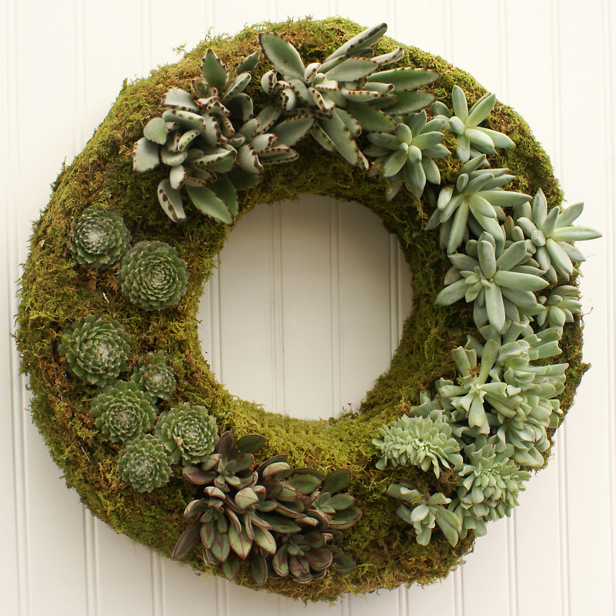 Moss & Succulent Wreath