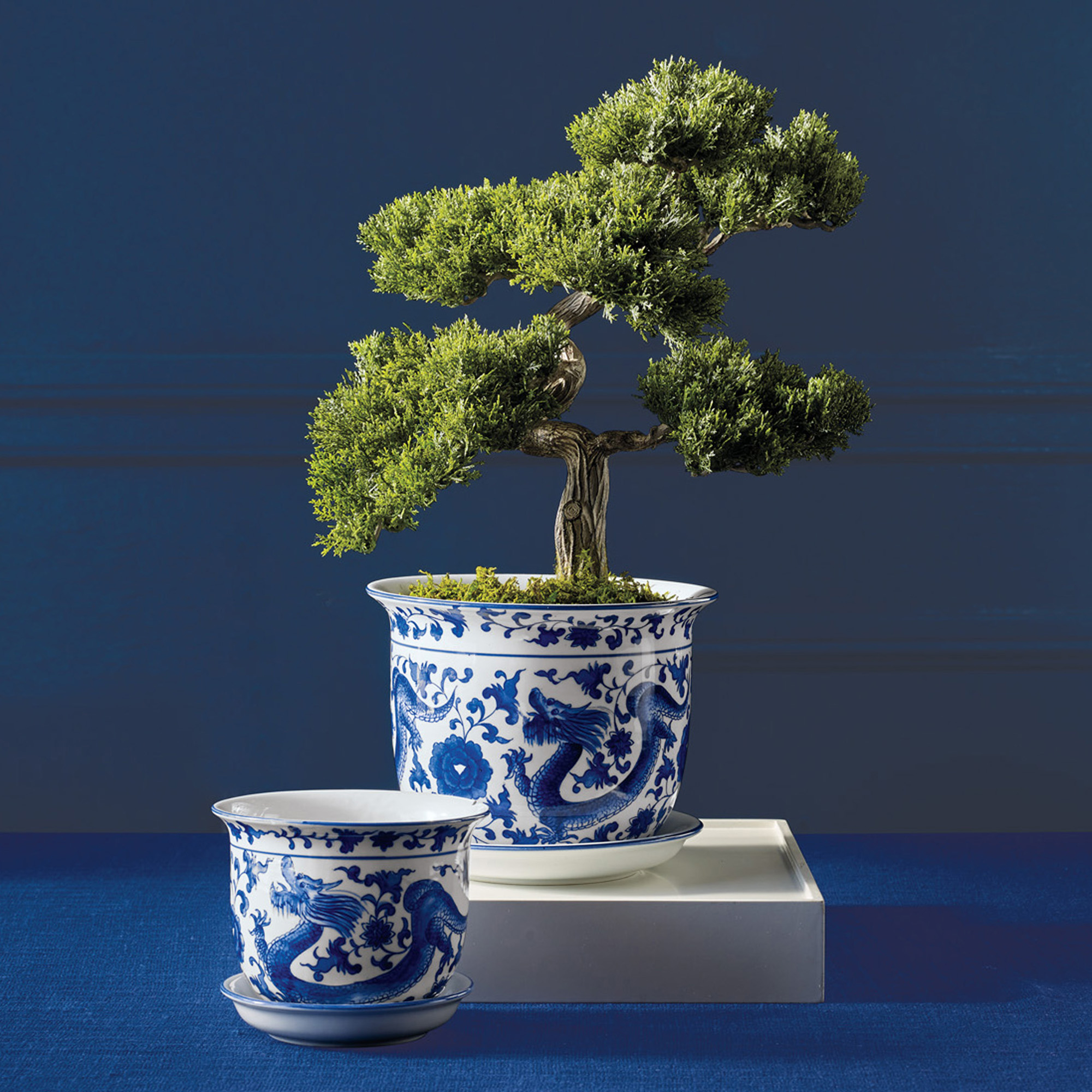 Blue & White Dragon Planters