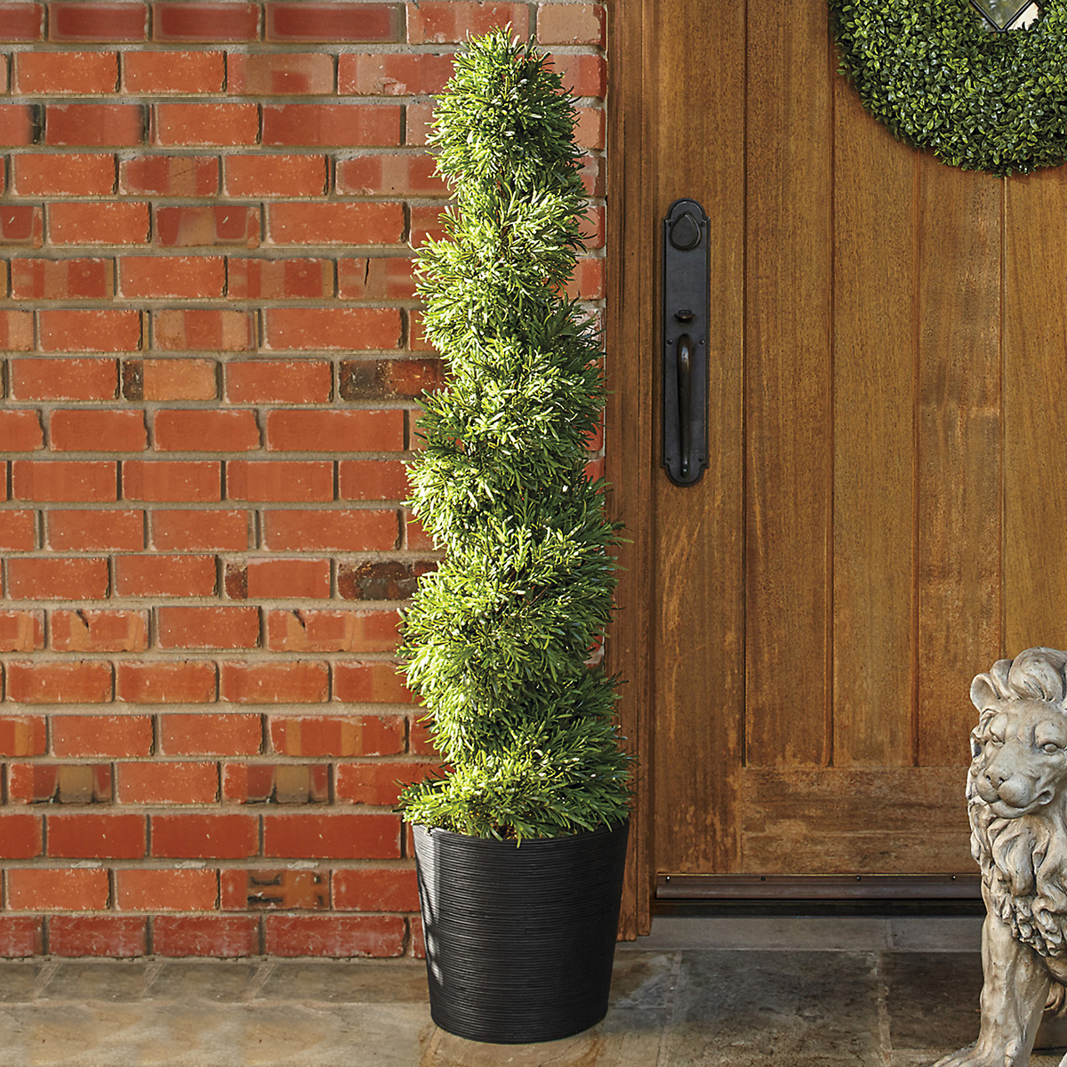 Rosemary Spiral Topiary