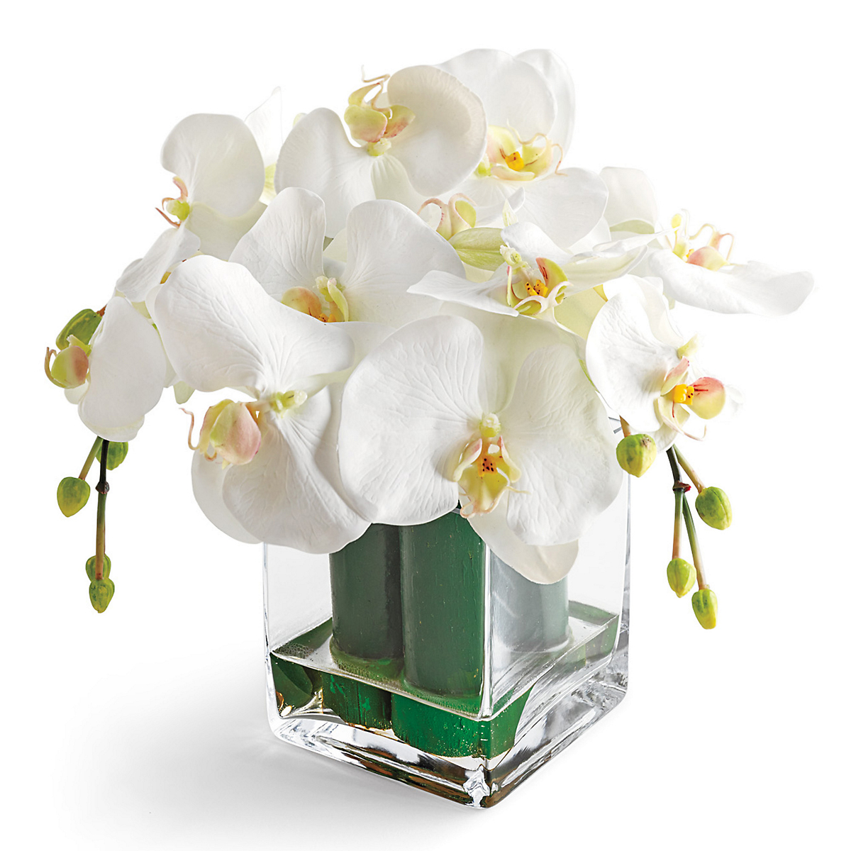 White Phalaenopsis With Bamboo