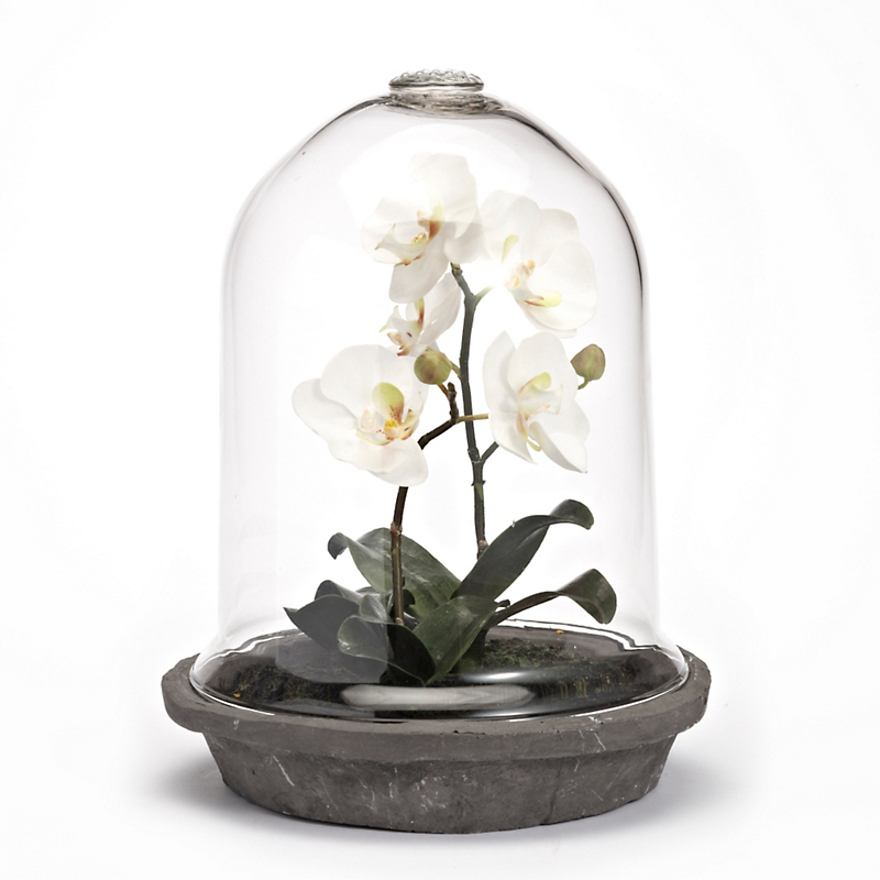 Orchids In Glass Dome, Phalaenopsis