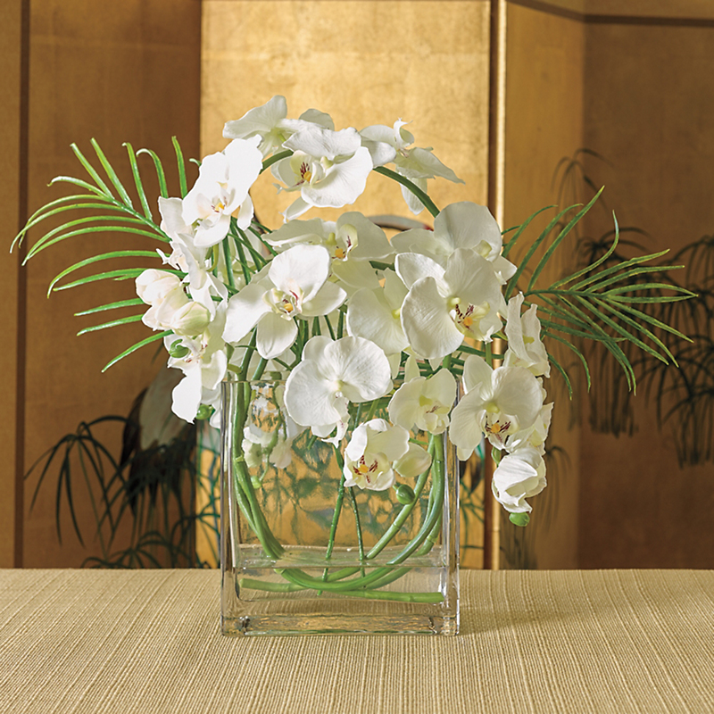 Phalaenopsis With Fern Arrangement