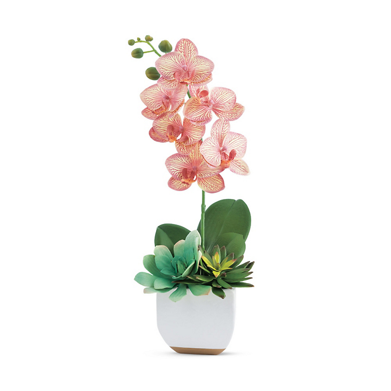 Pink Phalaenopsis With Succulents