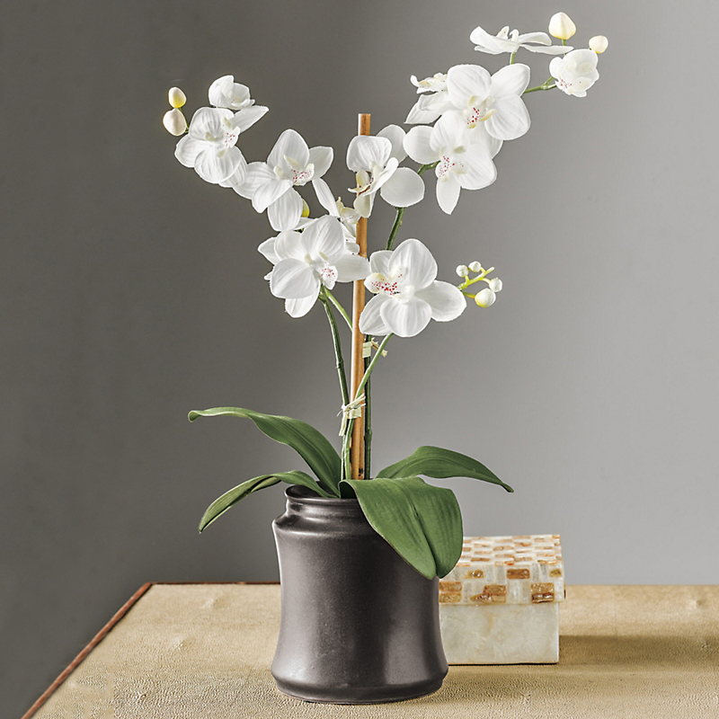 Double Phalaenopsis Orchid, White