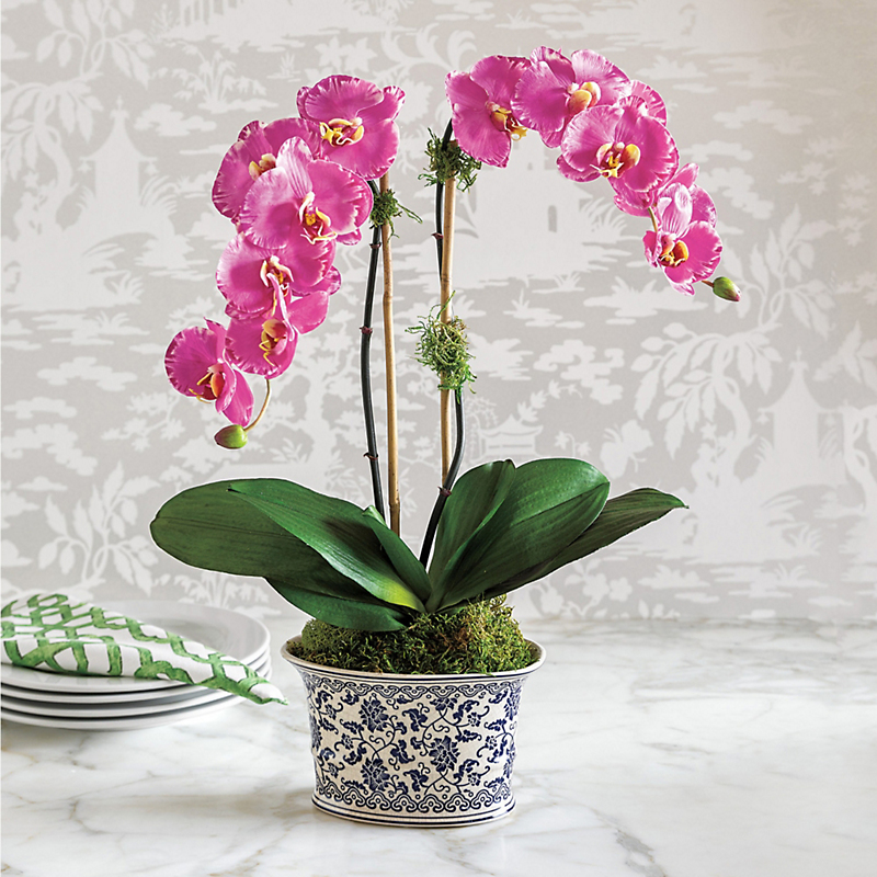 Royal Double Pink Orchid