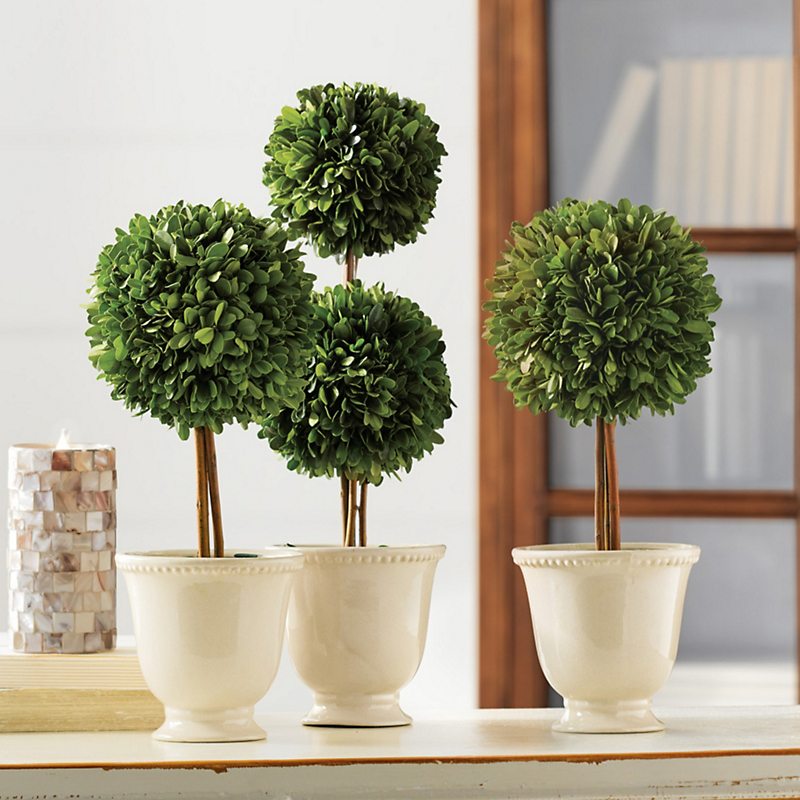 Preserved Boxwood Ball Topiaries