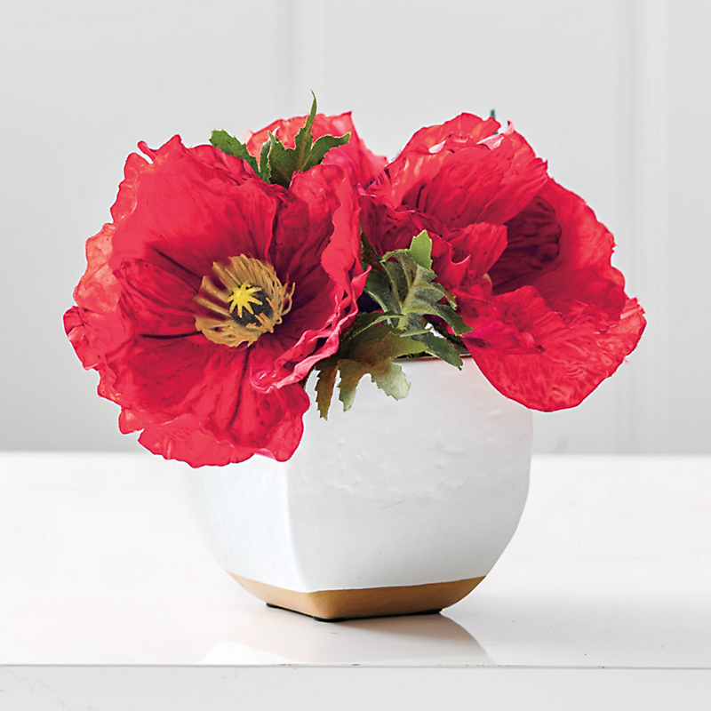 Ruby Red Poppy With Ceramic Pot