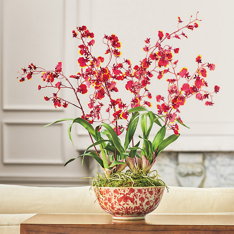Dancing Oncidium Orchid Arrangement