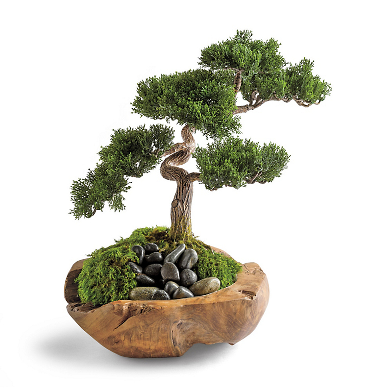 Bonsai With Teak Bowl