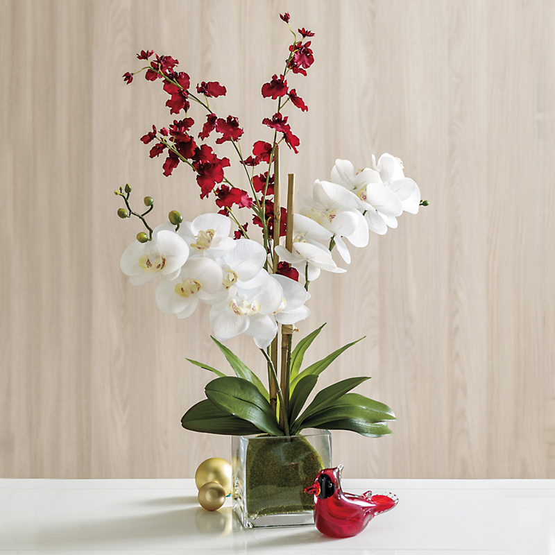 Red & White Double Oncidium Phalaenopsis Orchid