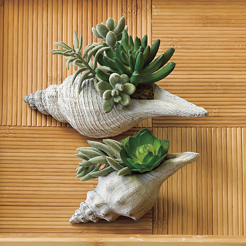 Succulent Shells, Set Of 2