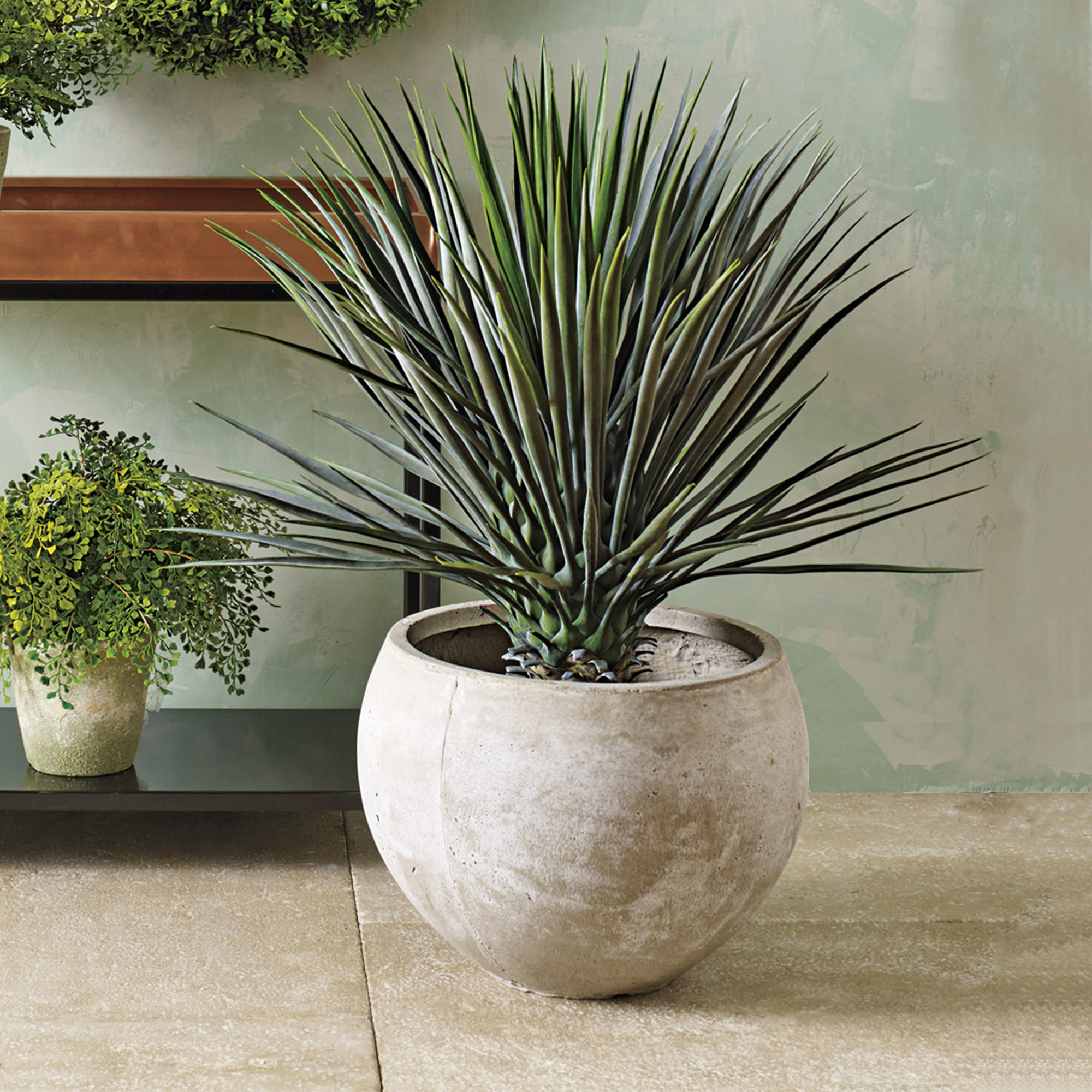 Whipple Yucca Plant