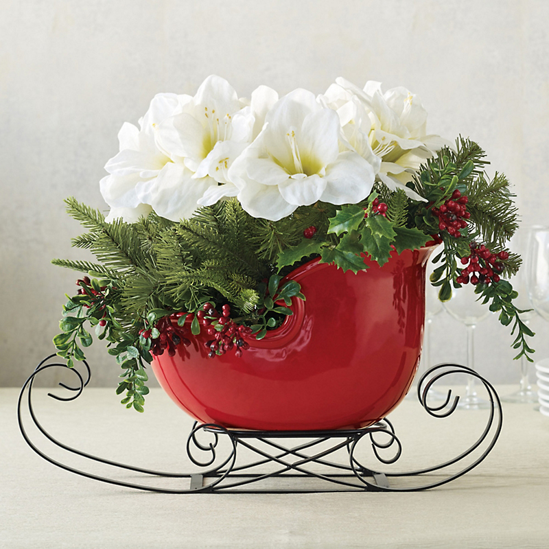 White Amaryllis In Red Sleigh