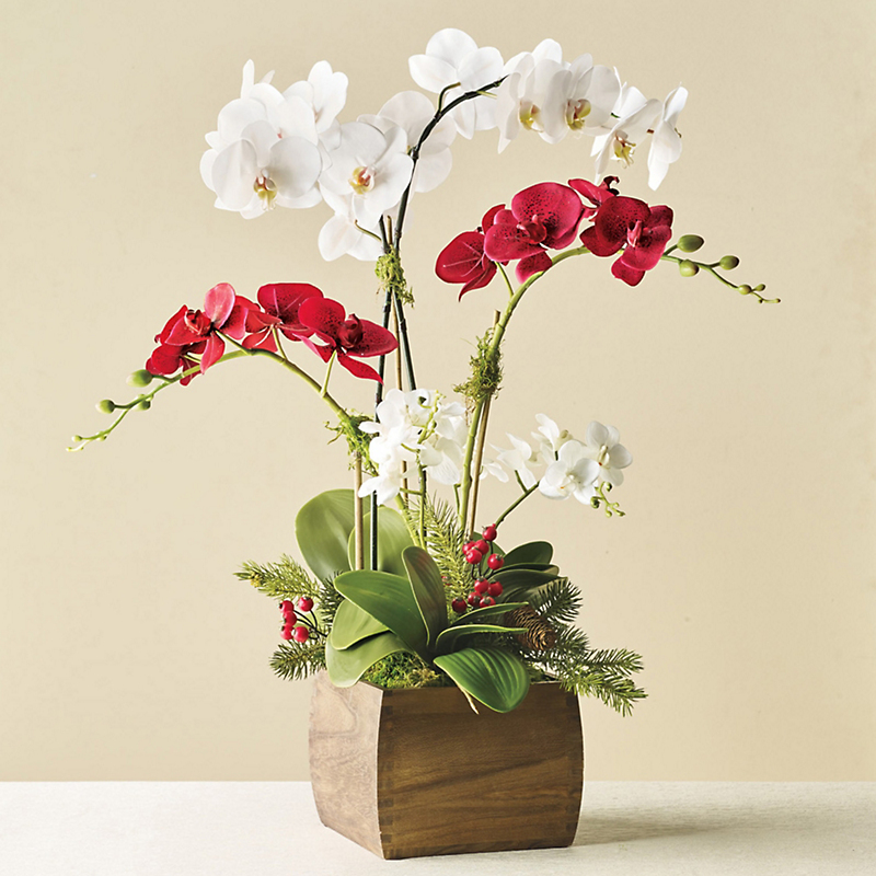 Holiday Red & White Orchids
