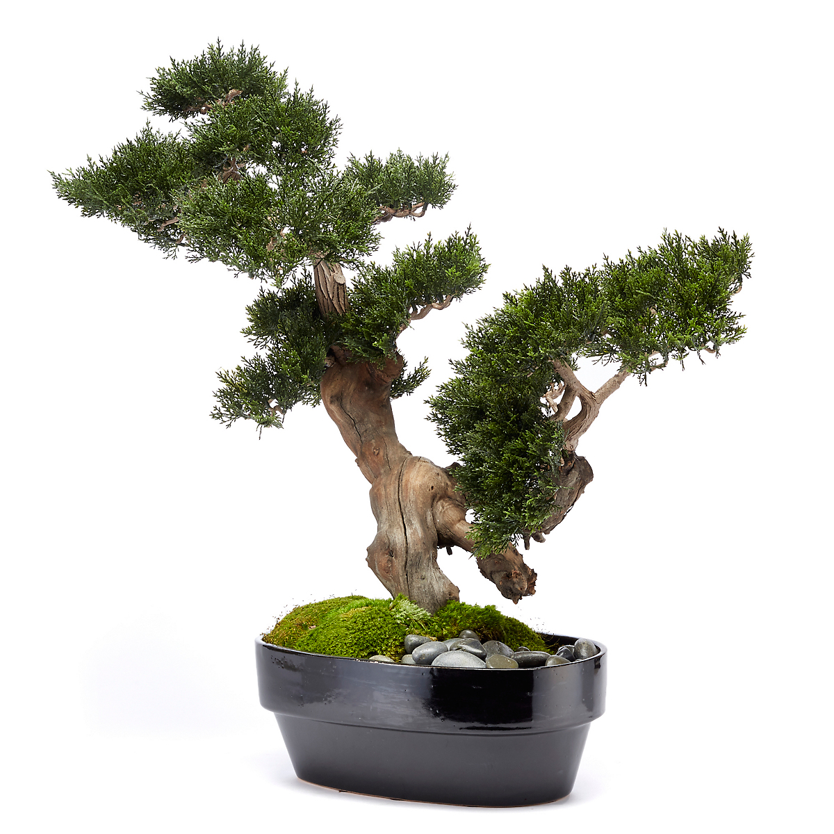 Moyogi Bonsai