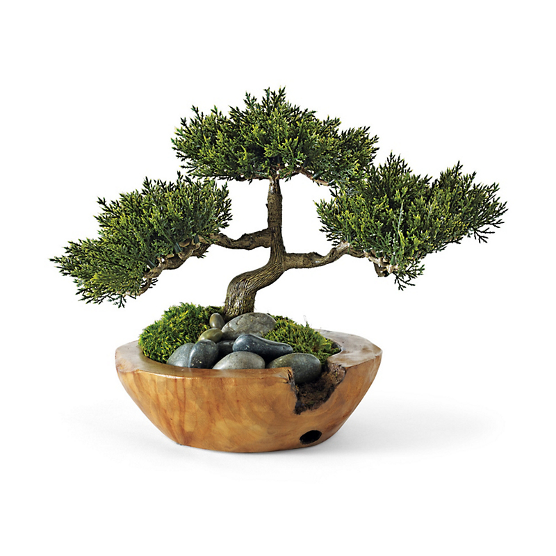 Small Bonsai With Teak Bowl