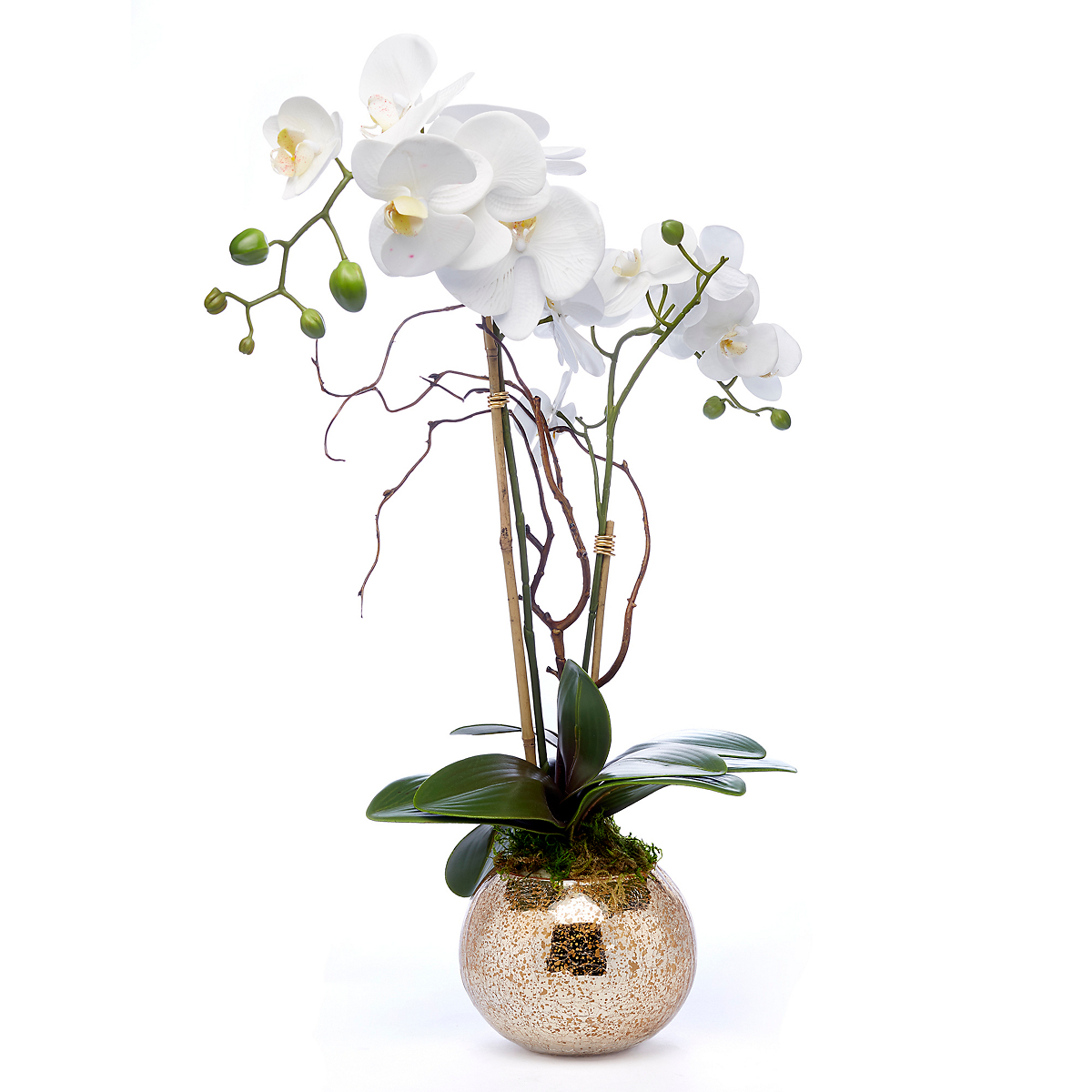 White Phalaenopsis Orchid With Gold Ball Vase