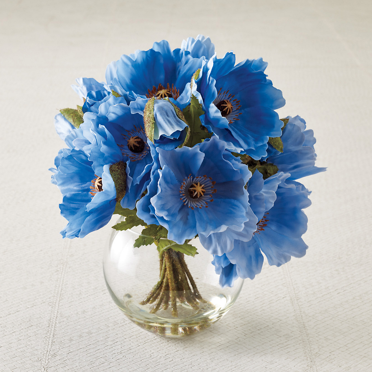 Blue Himalayan Poppies