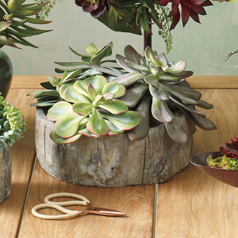 Echeveria Succulent In Faux Bois Planter