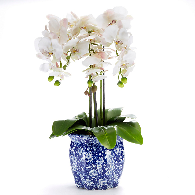 Triple White Phalaenopsis In Blue & White Pot