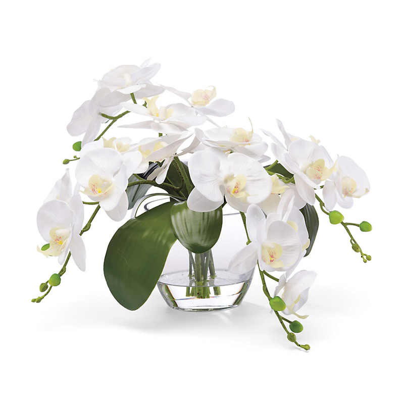 Angelina White Orchid