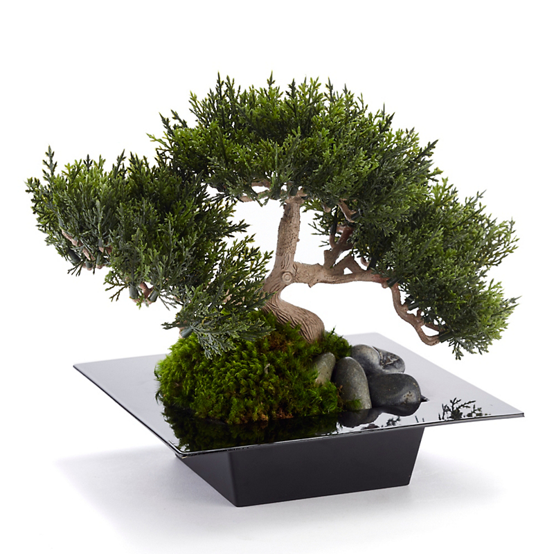 Kyoto Bonsai