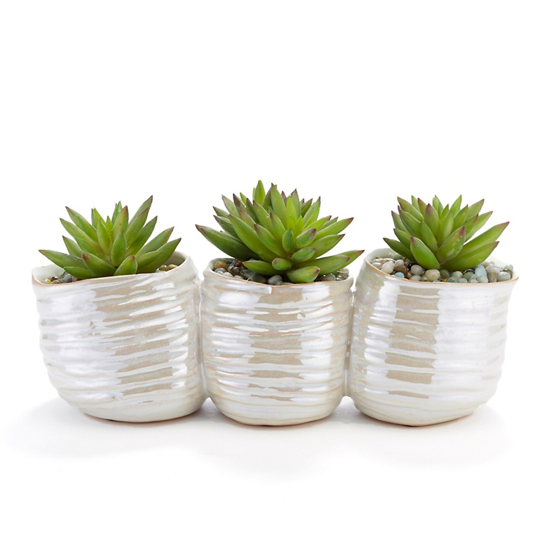 Mini Succulents Trio