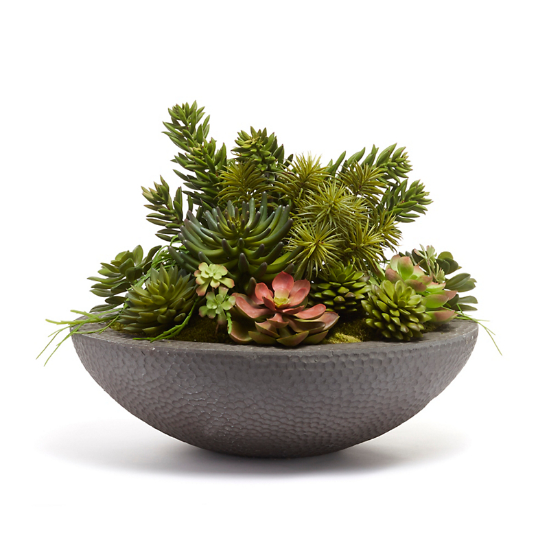 Grand Succulents in Hammered Bowl, Large