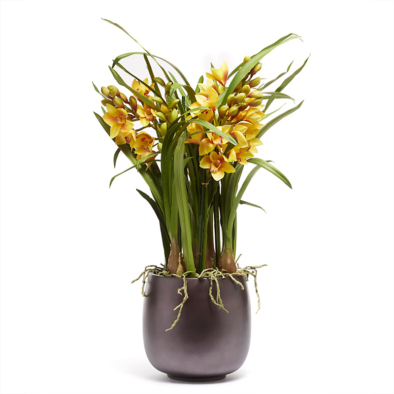 Grand Cymbidium Orchid, Golden