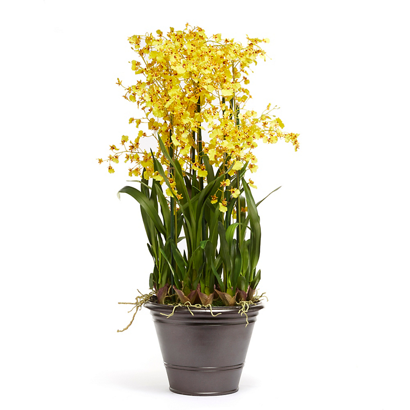 Grand Dancing Oncidium, Yellow